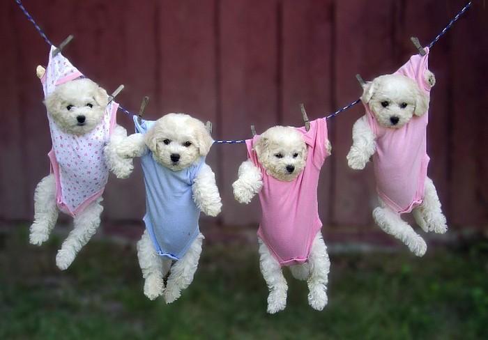 Cute-puppy-10